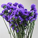 זול מזכרות מחזיקי מפתחות-חתונה / Party פרחים מיובשים קישוטי חתונה פרחוניים/בוטניים / נושא פרחוני / טבע דומם / רומנטיקה / פנטזיה / יומהולדת / חברים / משפחה / חתונה