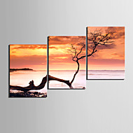cheap Prints-Stretched Canvas Print Canvas Set Floral/Botanical Modern,Three Panels Canvas Horizontal Print Wall Decor For Home Decoration