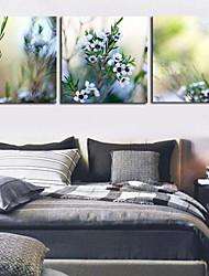 trasferimenti su tela set di stampa botanico floreale di 3 1301-0148