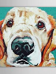 Недорогие -iarts®oil живопись животные животных собаки с растянутыми кадра ручная роспись холст