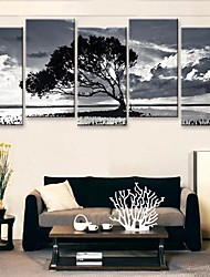 cheap -Stretched Canvas Art Black And White of The Shadow of The Tree Set of 5