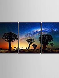 preiswerte -Keilrahmen Kunst-Wüste im Schatten des Baumes Satz von 3