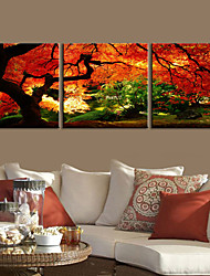 E-HOME® Stretched Canvas Art Landscape Go Deep Into a Forest Decorative Painting Set  of 3