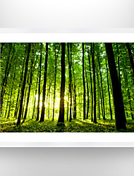 cheap -VISUAL STAR®Green forest Picture Print Photo Frame Natural Landscape Wall Art Ready to Hang