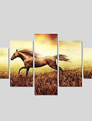 Canvas Print Art Set Of 5 Wall Pictures For Linving Room Modern Horse Pictures Home Decor