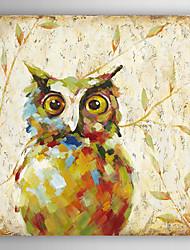 ručně malované olejomalba zvířat abstraktní sova s napnuté rámem
