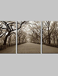 cheap -Stretched Canvas Art Landscape The Central Park Set of 3