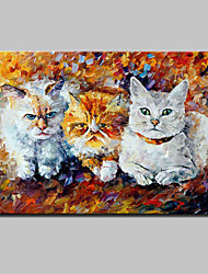Hand Painted Three Little Kittens Animal Oil Painting On Canvas Modern Abstract Wall Art For Home Decoration Ready To Hang