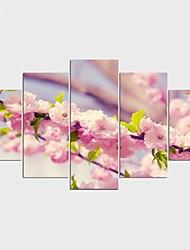 Недорогие -Отпечатки на холсте Цветочные мотивы/ботанический Стиль Modern,5 панелей Холст Любые формы С картинкой Декор стены For Украшение дома