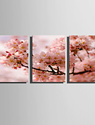 cheap -E-HOME Stretched Canvas Art Pink Flowers Decoration Painting Set Of 3