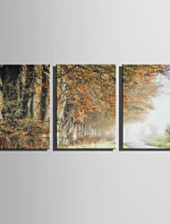 cheap -E-HOME Stretched Canvas Art  Autumn Trees Scenery Decoration Painting Set Of 3