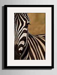 E-HOME® Framed Canvas Art Portrait Of Zebra Framed Canvas Print One Pcs