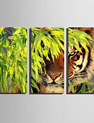 cheap -E-HOME Stretched Canvas Art Tiger In The Woods Decoration Painting Set Of 3