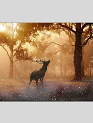 cheap -Oil Paintings Sika Deer Style Canvas Material With Wooden Stretcher Ready To Hang Size60*90CM and 50*70CM .