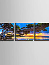 cheap -E-HOME Stretched Canvas Art Lakeside Tree Decoration Painting Set Of 3