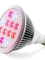 E27 LED Aufzuchtlampen 12 Hochleistungs - LED 800 lm Rot Blau K V