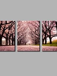 abordables -Peint à la main A fleurs/Botanique Panoramique horizontal, Artistique Style floral Anniversaire Cool Moderne/Contemporain Bureau /