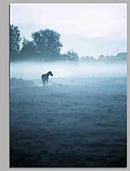 prés dans le brouillard 100% peint à la main peintures à l'huile contemporaines art moderne art mural pour la décoration de la chambre