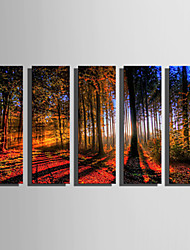 cheap -Stretched Canvas Print Art Landscape Woods in Sunrise Set of 5