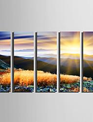 Недорогие -С картинкой Отпечатки на холсте - Пейзаж Цветочные мотивы / ботанический Modern