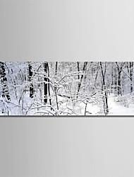 Недорогие -С картинкой Роликовые холсты - Зима / Фото Modern