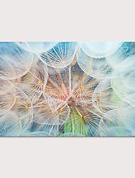 Недорогие -С картинкой Отпечатки на холсте - ботанический Фото Modern