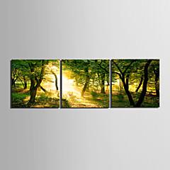 tanie Sztuka ścienna-Humor Pejzaże Krajobraz Trzy panele Poziomy Wydrukować wall Decor Dekoracja domowa