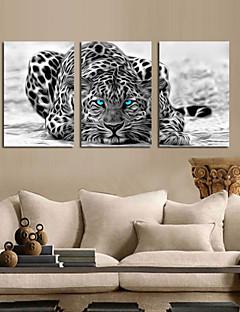 panza Set Abstract Animal Modern Tradițional,Trei Panouri Vertical print Arta Decor de perete For Pagina de decorare