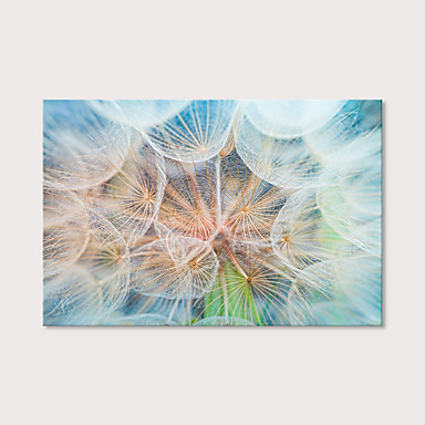 cheap Prints-Print Stretched Canvas Prints - Botanical Photographic Modern