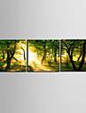 Stretchad Kanvastryck Landskap Tre paneler Horisontell Tryck väggdekor Hem-dekoration